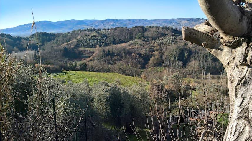 Sunny green wine and olive hills of Soiana Tuscany