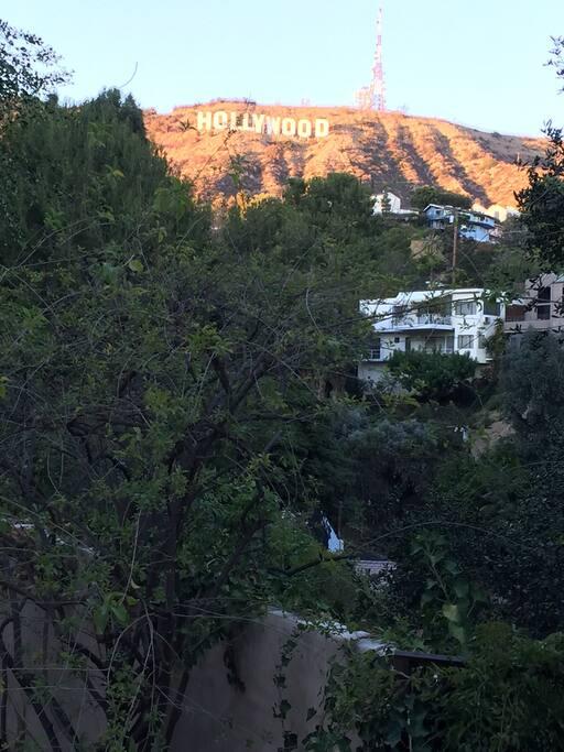 Terraced garden under the Hollywood sign