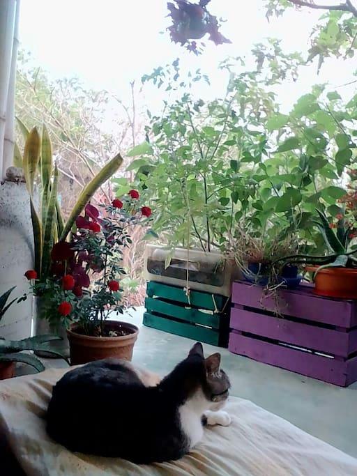 Mística, nuestra gatita.