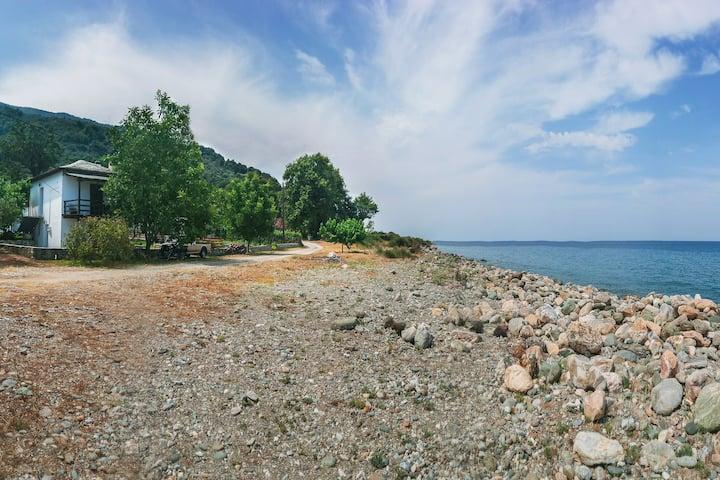 Λεμονόκηπος δίπλα από τη θάλασσα