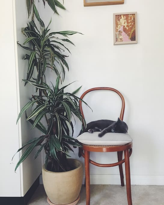 Entrance foyer (kitty not included)