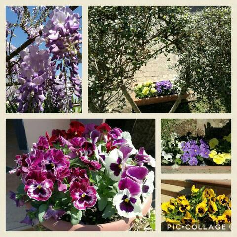 in primavera il cortile si colora per accogliere gli ospiti ,è un incanto!