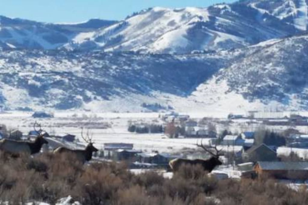 Park City Resort from living room with elk passing by