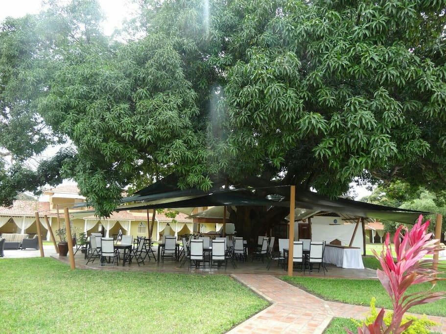 Canopy breakfast/outdoor seating area.