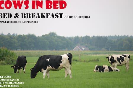 Cows in bed-logeren op de boerderij - Nieuwlande