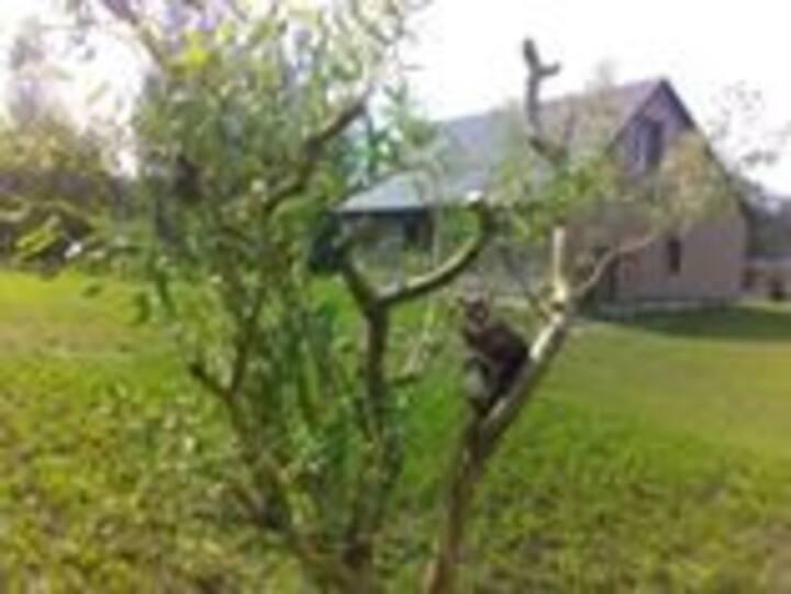 Домик на хуторе