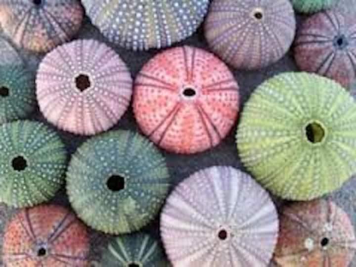 "Sea Shack ""Urchin"" - sea facing unit"