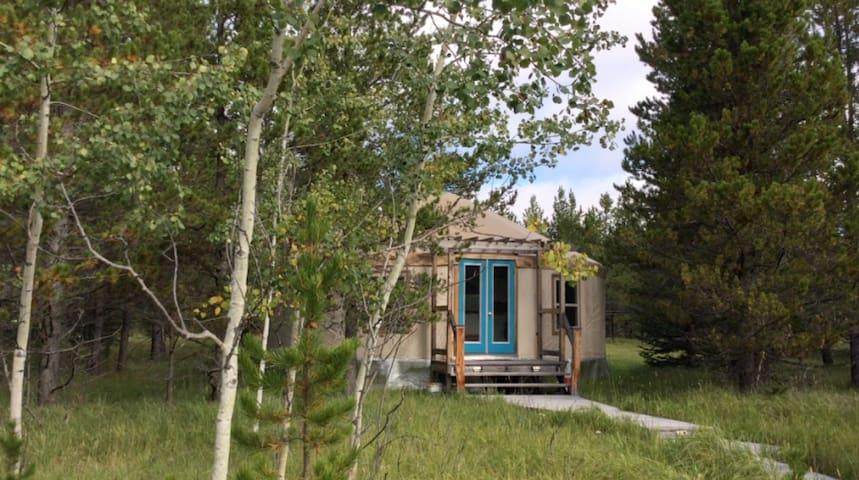 Little Yurt. Big Woods  | Foothills of the Rockies