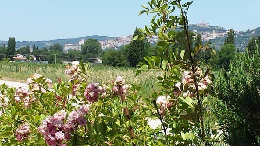 Casa vacanze Nonna Jole - Assisi - Hus