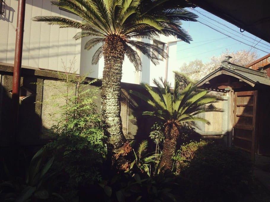 Japanese front garden!