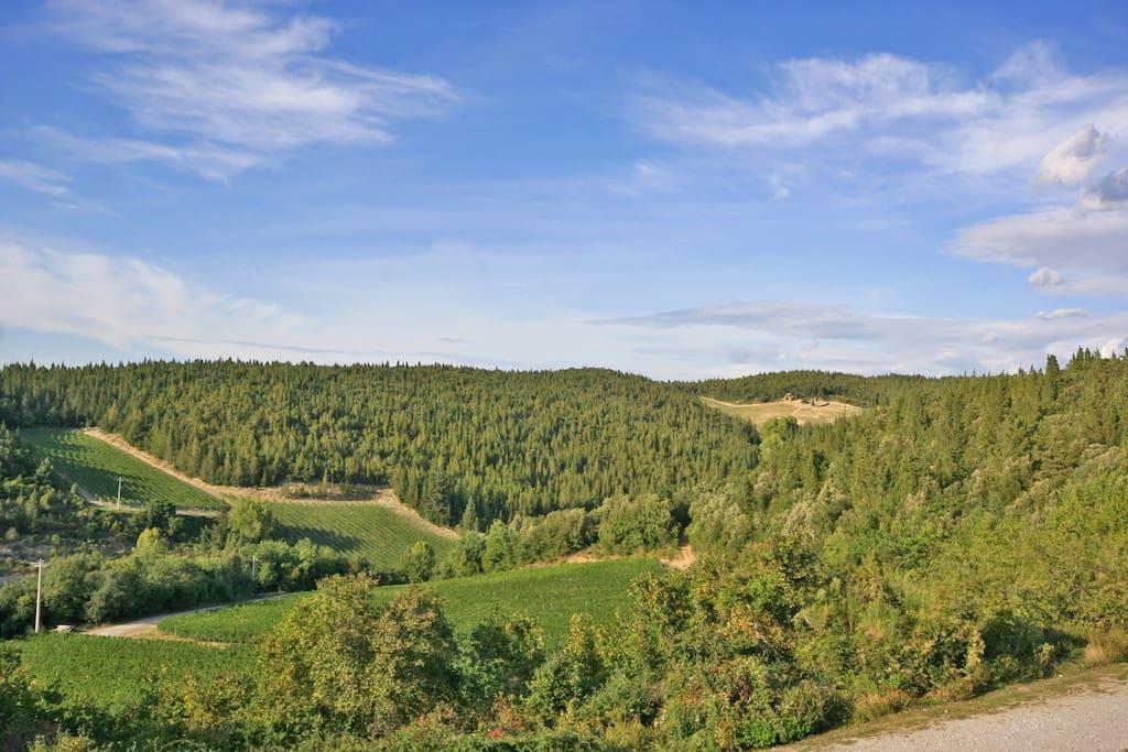 vista vigne e bosco