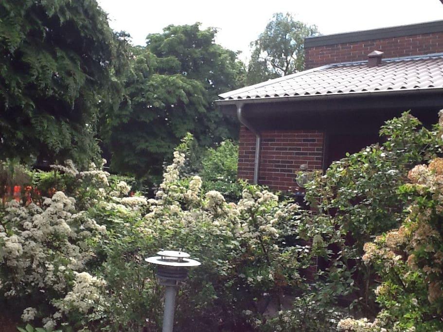 Forhave. Front garden
