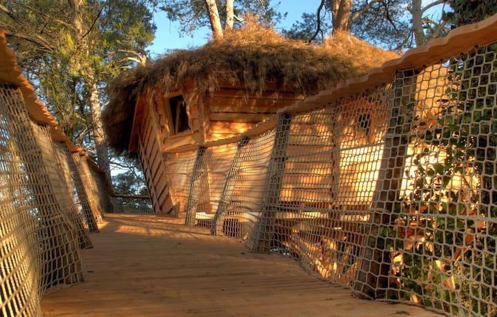 Cabane dans les arbres dans l'Aude