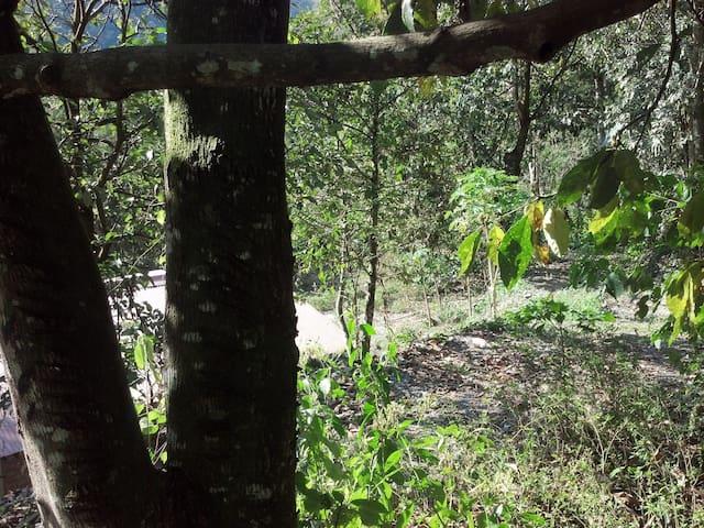 La Cabaña Blanca de Tunahuarca, Coroico,  La Paz - Coroico - Cabin