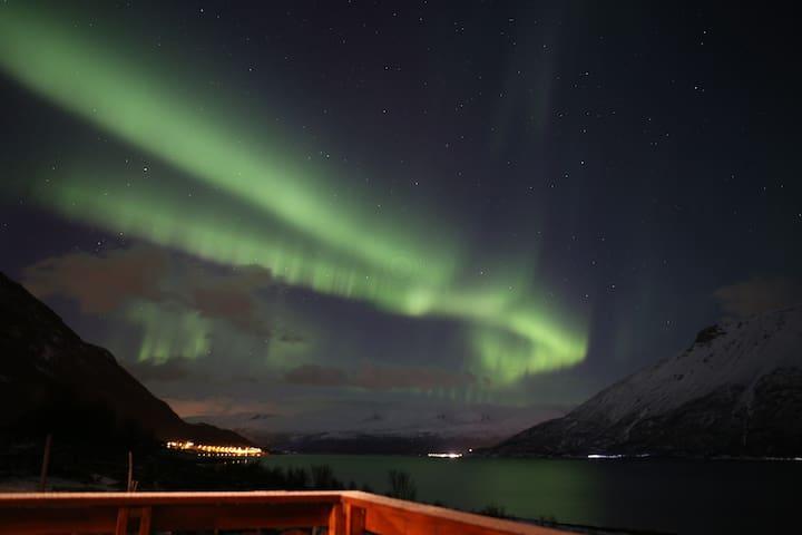 Steindalen - Tett på Lyngsalpene, Tamok og Tromsø