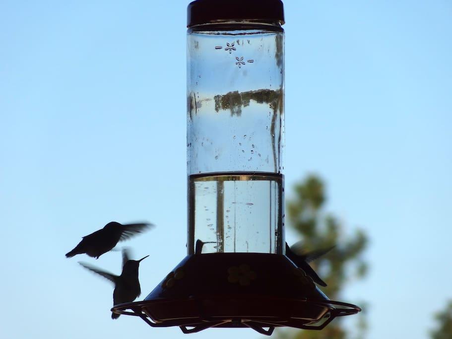 Hummingbirds love Country Ridge B&B