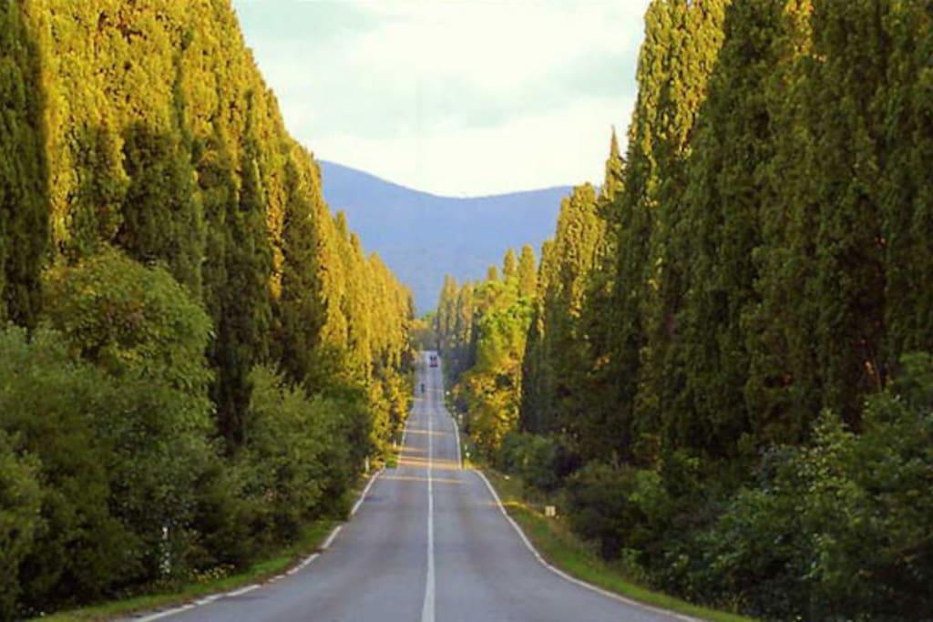 L'incantato viale dei cipressi che conduce al borgo