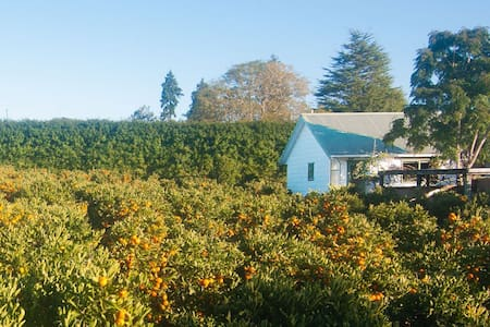 Charming Orchard Cottage - Kerikeri