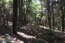 Dans le cratere de Monte Fossa, plein de chataigniers et de pins plantes notamment par Salvatore, le pere de Gianluca, qui q ete garde forestier pendant plus de 30 ans. En automne, c'est le paradis des cepes.