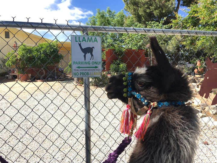 Ixchel approves of sign