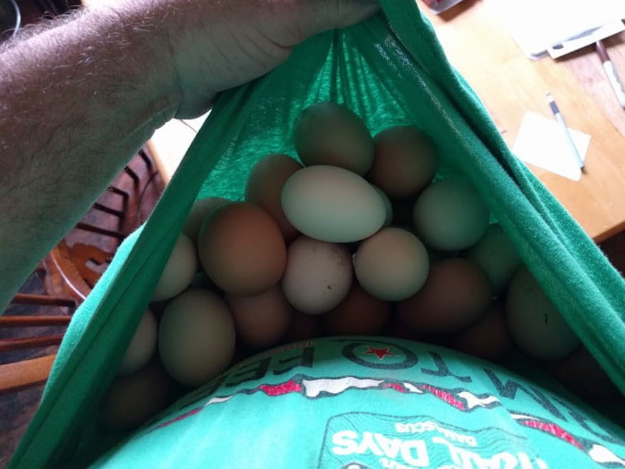 Collect eggs with us