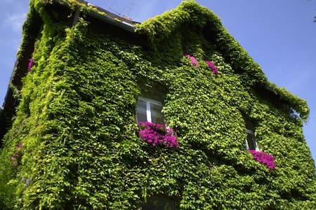 "Apartment ""Bambuswald"" - Hofheim - House"