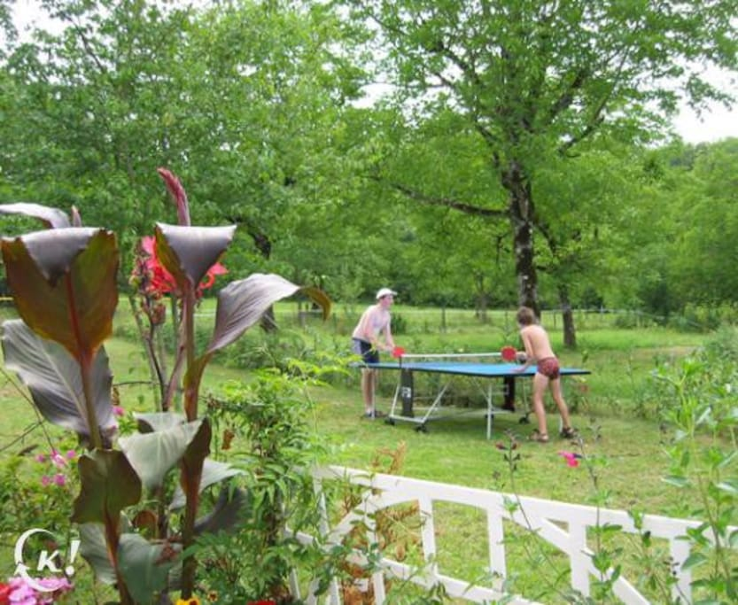 Swimming Pool in orchard with fruit trees - free to pick in season