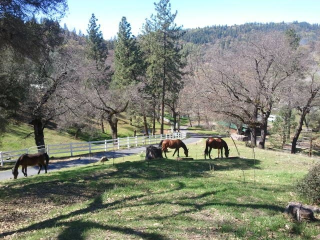 Lodestar Gold Equine BnB - Grass Valley - House
