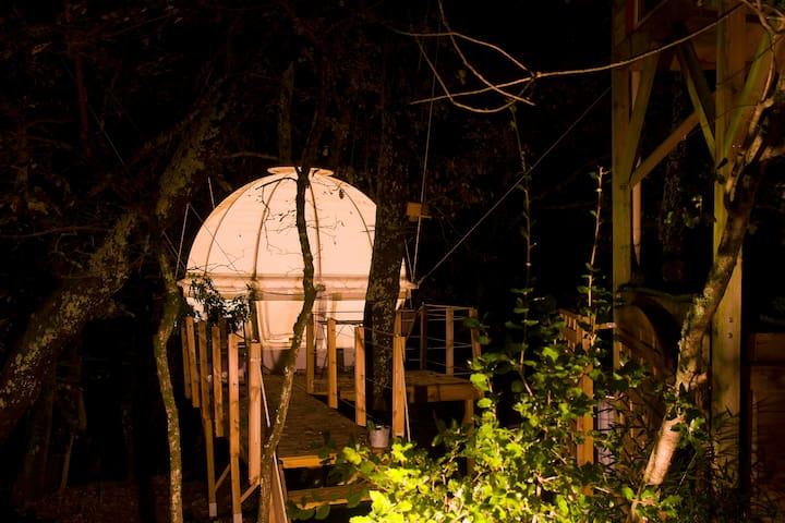 Bulle cocoon suspendue dans les arbres en Ardèche