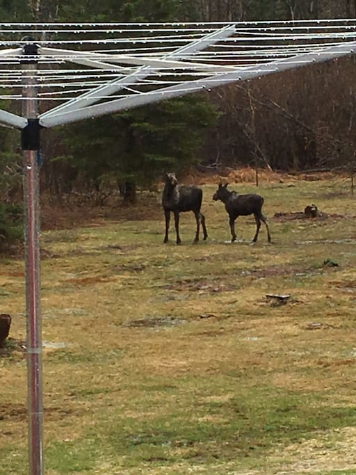 In our back yard