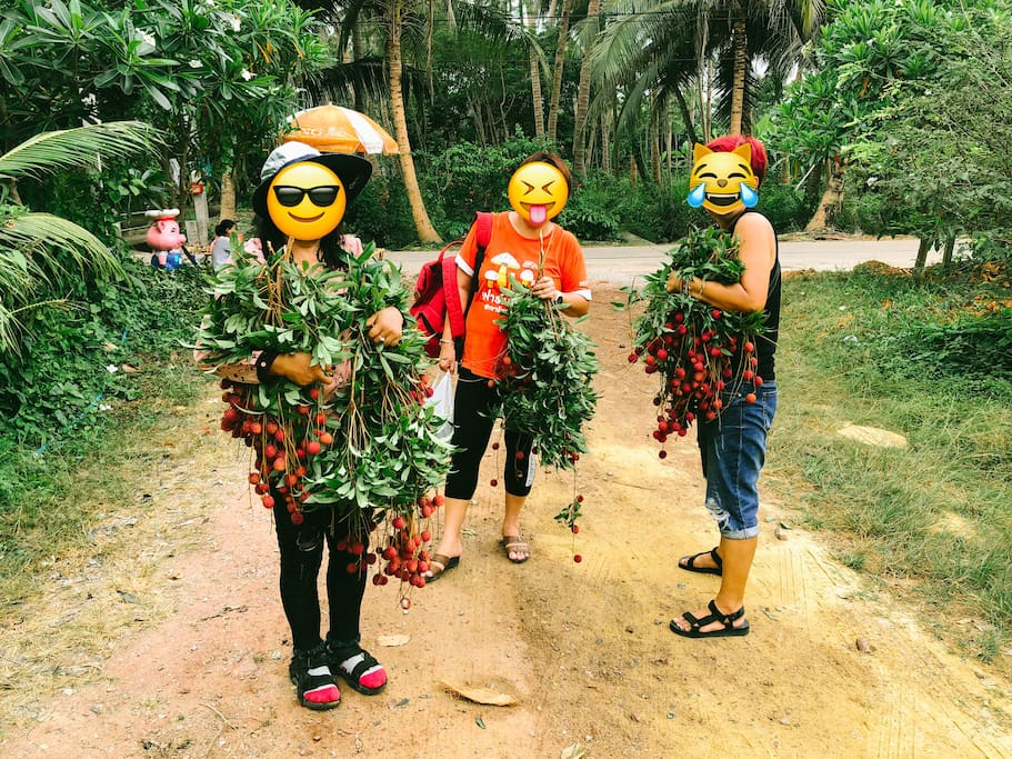 *Updated 01/04/18 lychee hunting party by our lovely guests >_<