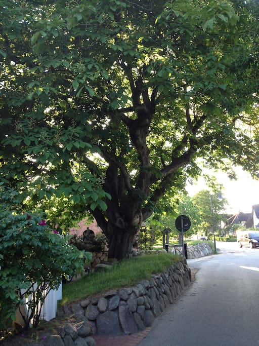 Unser wunderschöner großer, starker, alter Kastanienbaum schützt vor Regen, Blitzen, bösen Menschen und Hunden. Falls mal nicht - einfach hochklettern.