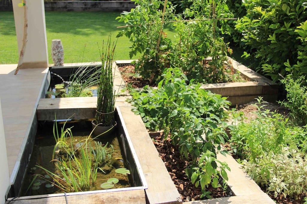 Jardin aromatique et mare