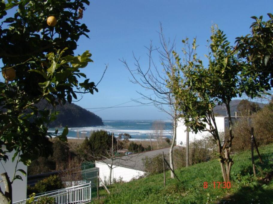View of the sea from the garden