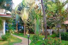 The striking palms in the garden.