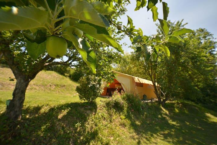 Safari Tent - Gaillac-Toulza - Tent