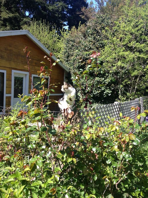 View from rose garden with Marley, a favorite cat of our guests.