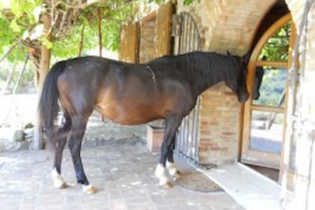 Loft farmhouse with horses & sea - Basse di Caldana - Huoneisto