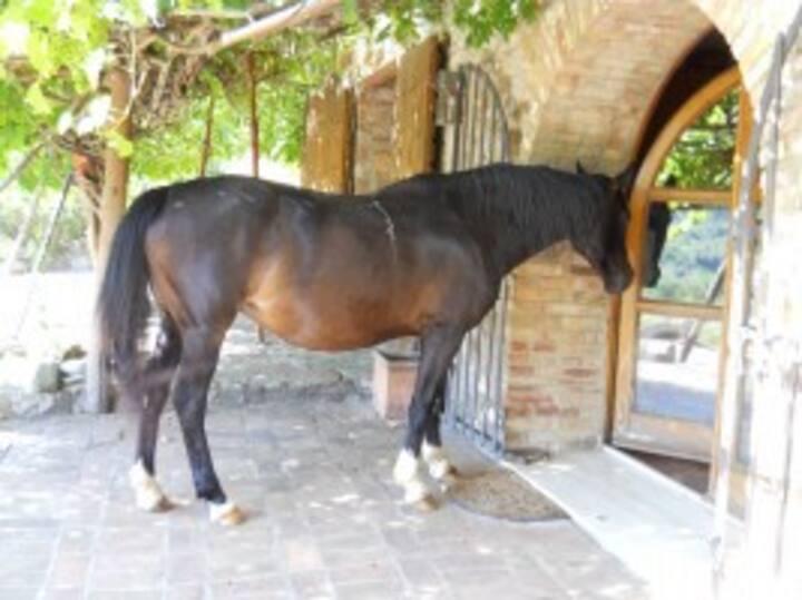Loft in farmhouse with horses & sea
