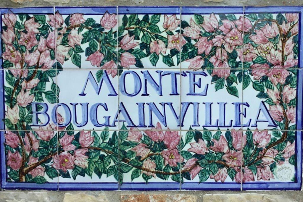 Monte Bougainvillea