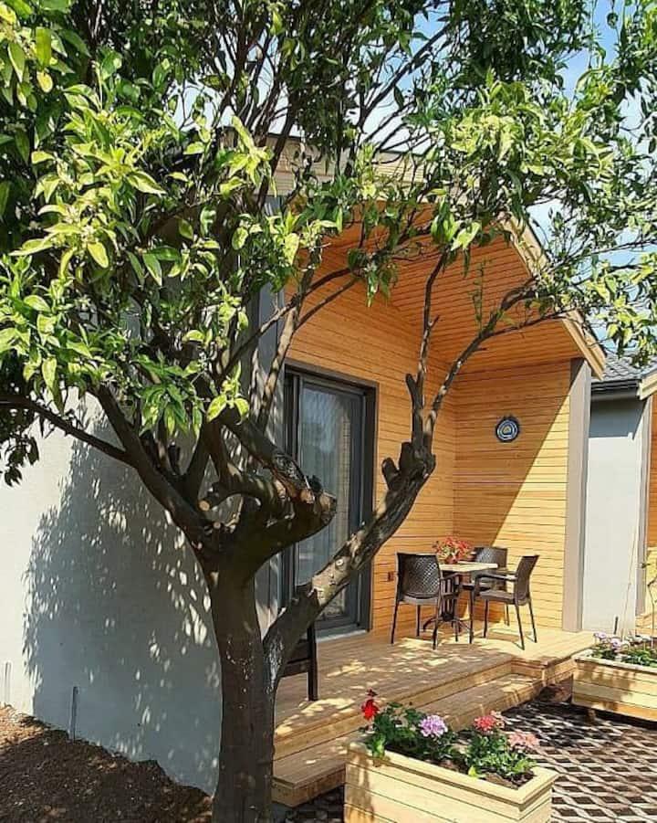 Zeytin Ağaçları Arasındaki Küçük Eviniz