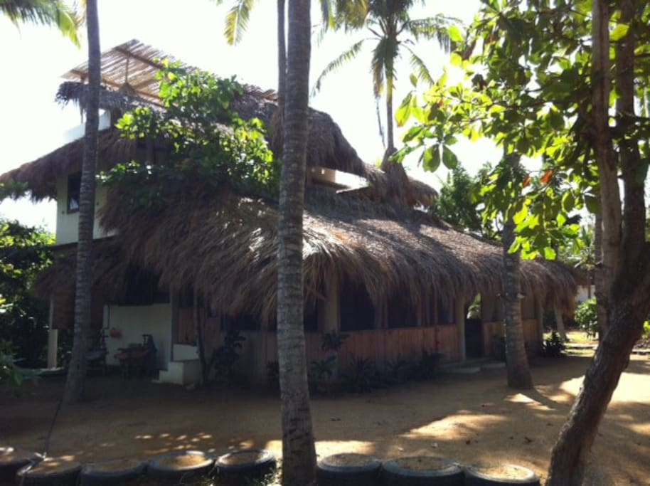 Yes, those are palm trees sticking out through the palapa roof!