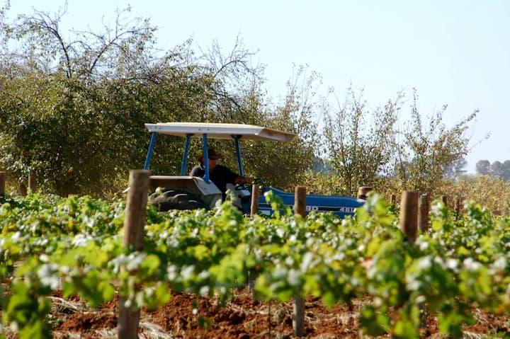 Catania Farm Stay