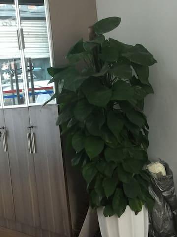 福建漳州新立大厦的整套房源 - 福建省 - Haus