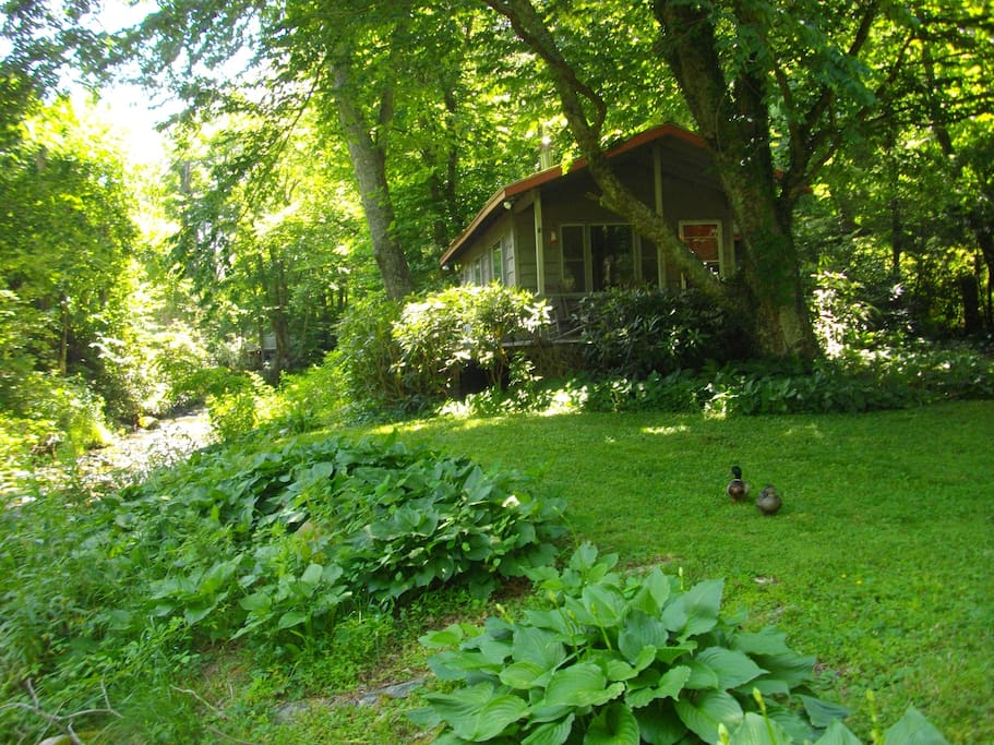 Cozy creekside cabin in boone houses for rent in boone for Boone ski cabin rentals