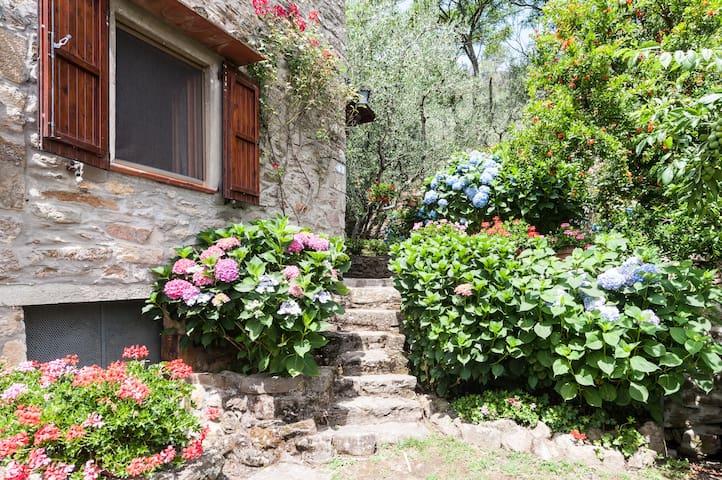 Rustico in pietra fra gli olivi - Buti - Casa