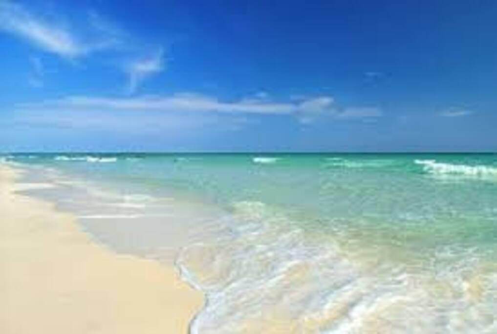 swim in the gulf