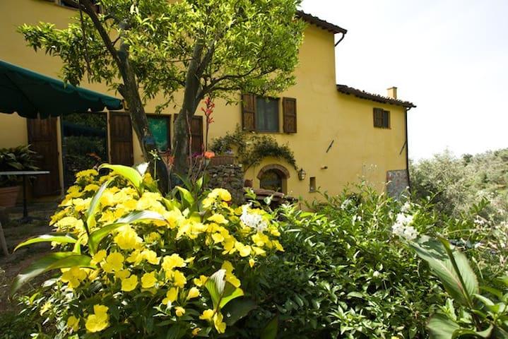 Casolare antico toscano con oliveto - Calci - Appartement