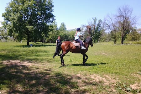 Famiglia a cavallo,natura e relax - Casa del Bosco