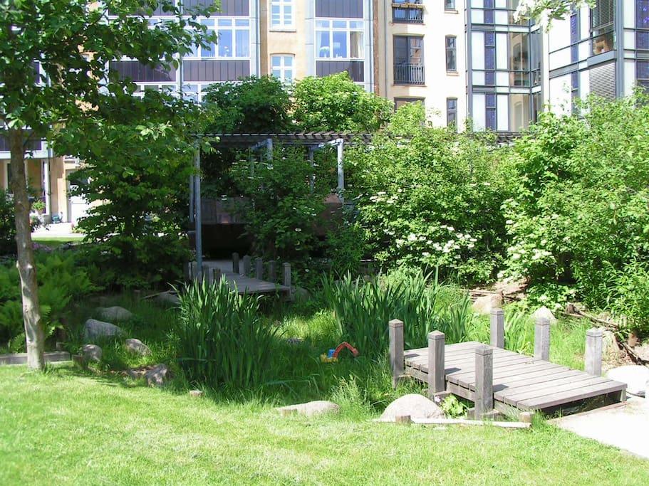 View from the garden/backyard